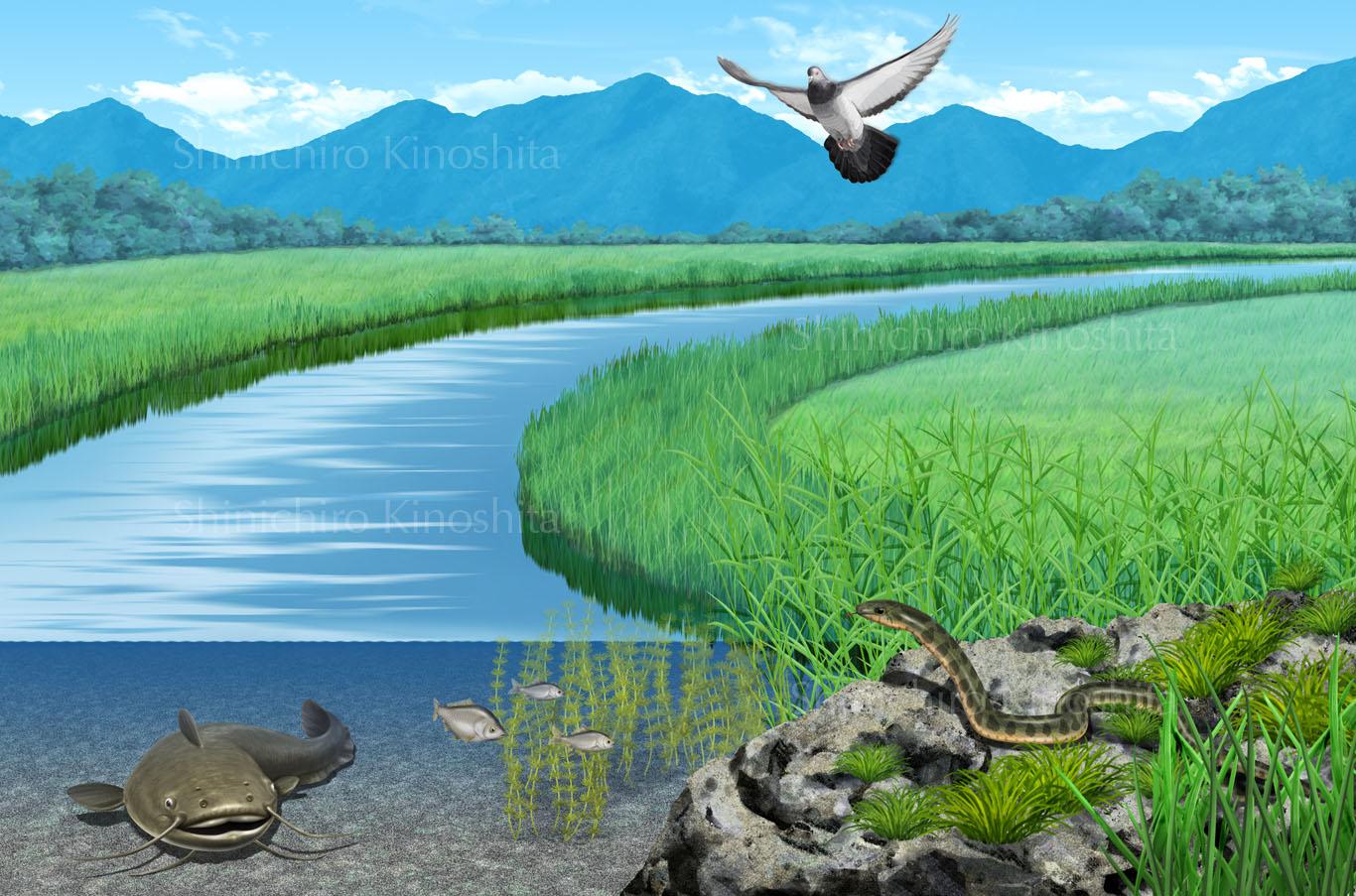 水辺の生物ーベネッセコーポレーション