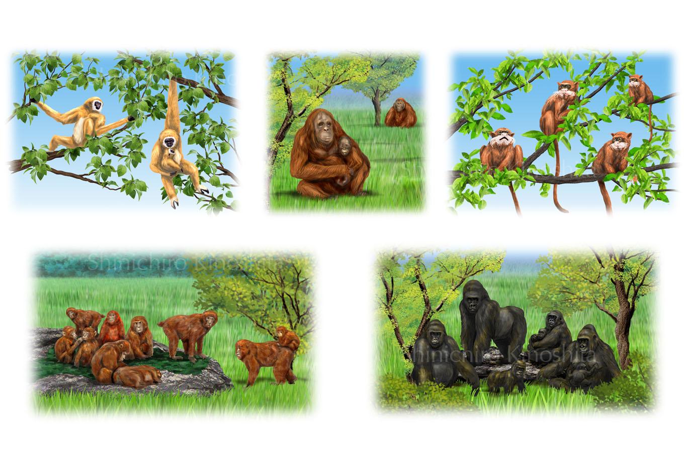 霊長類ー「週刊 地球46億年の旅」朝日新聞出版