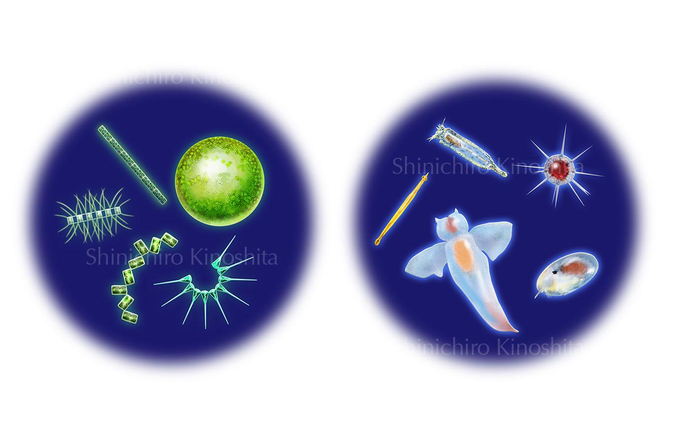 植物プランクトンと動物プランクトンー「海中大探検」(岩崎書店)