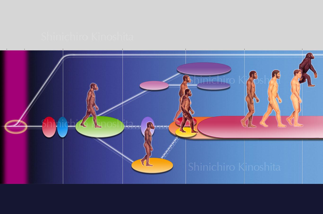 人類の進化ーNewton