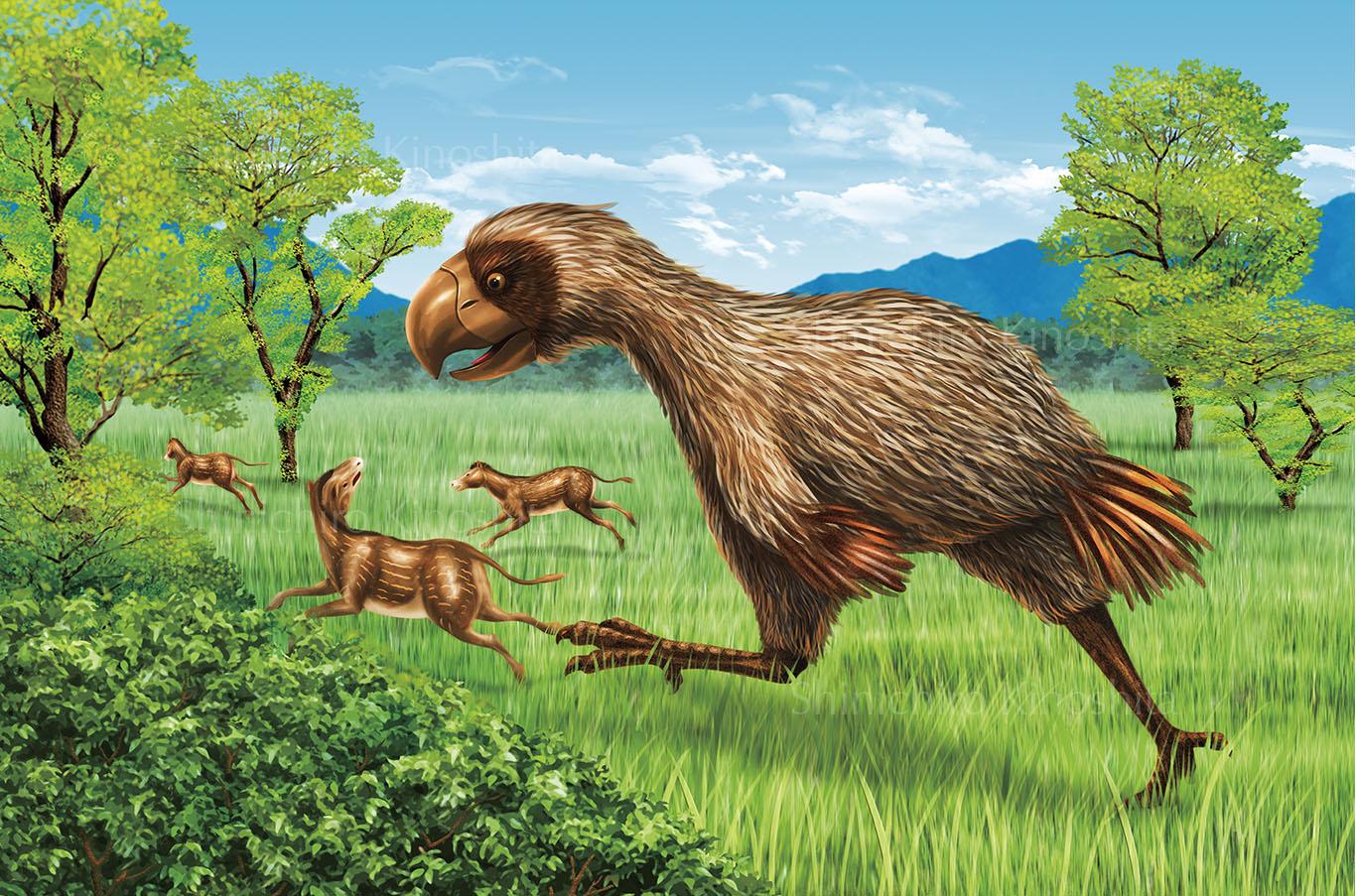 恐鳥ディアトリマー「週刊 地球46億年の旅」朝日新聞出版